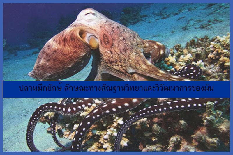 ปลาหมึกยักษ์